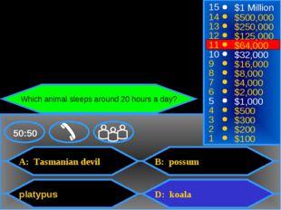 A: Tasmanian devil platypus B: possum D: koala 50:50 15 14 13 12 11 10 9 8 7