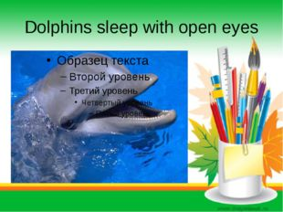Dolphins sleep with open eyes