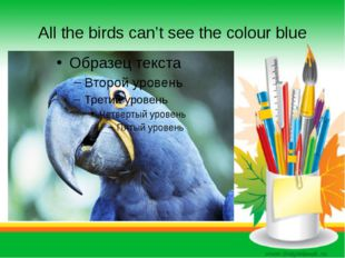 All the birds can't see the colour blue