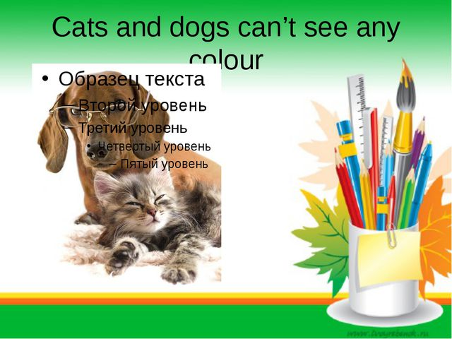 Cats and dogs can't see any colour