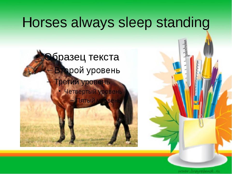 Horses always sleep standing