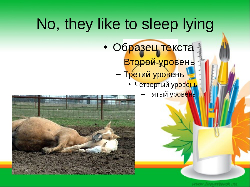 No, they like to sleep lying