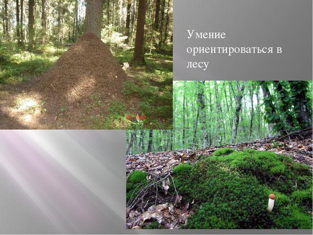Умение ориентироваться в лесу
