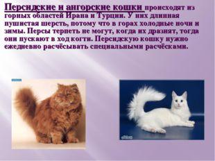 Персидские и ангорские кошки происходят из горных областей Ирана и Турции. У