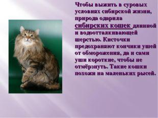 Чтобы выжить в суровых условиях сибирской жизни, природа одарила сибирских ко