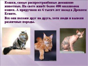 Кошки, самые распространённые домашние животные. На свете живёт более 400 мил