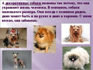 А декоративные собаки названы так потому, что они украшают жизнь человека. В