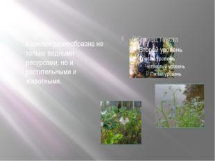 Карелия разнообразна не только водными ресурсами, но и растительными и живот