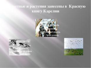 Животные и растения занесены в Красную книгу Карелии