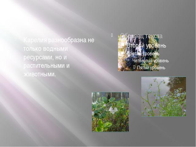 Карелия разнообразна не только водными ресурсами, но и растительными и живот...