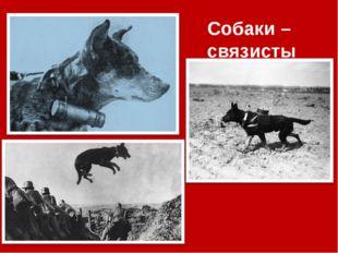 Собаки – связисты