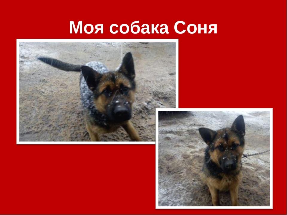 Моя собака Соня