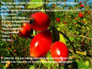 Но если заметили здесь еще встечаются лекарственные растения, ягоды. Какие ле