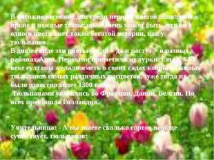 В погожие весенние дни среди первых цветов появляются яркие и нежные тюльпаны