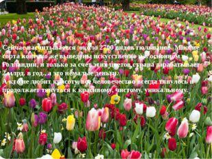 Сейчас насчитывается около 2700 видов тюльпанов. Многие сорта конечно же выве