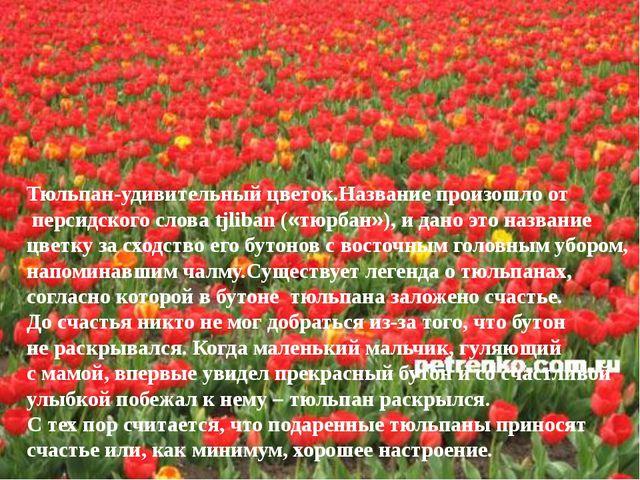 Тюльпан-удивительный цветок.Название произошло от персидского слова tjliban (...