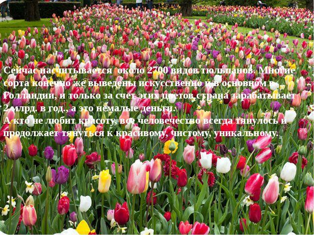 Сейчас насчитывается около 2700 видов тюльпанов. Многие сорта конечно же выве...