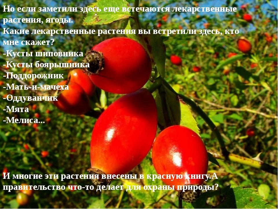 Но если заметили здесь еще встечаются лекарственные растения, ягоды. Какие ле...