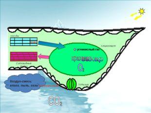 Устьица Хлоропласт сосуды вода углекислый углекислый газ Ситовидные тубки