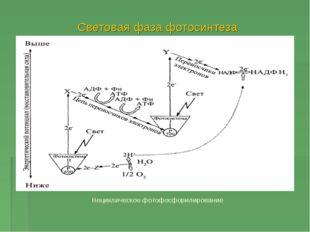 Световая фаза фотосинтеза Нециклическое фотофосфорилирование