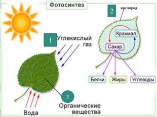 кккикислкислородородислородислорода