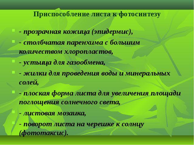 Приспособление листа к фотосинтезу - прозрачная кожица (эпидермис), - столбча...