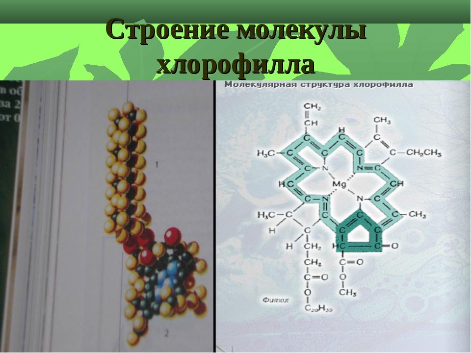 Строение молекулы хлорофилла
