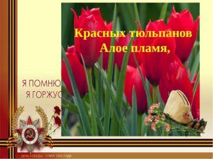 Красных тюльпанов Алое пламя,