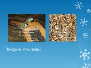 Покормим птиц зимой Разнообразный корм