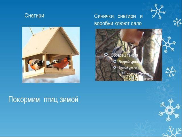 Покормим птиц зимой Снегири Синички, снегири и воробьи клюют сало