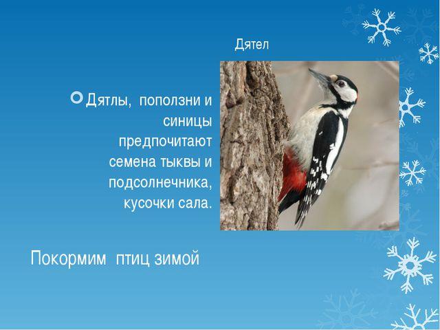 Покормим птиц зимой Дятлы, поползни и синицы предпочитают семена тыквы и подс...