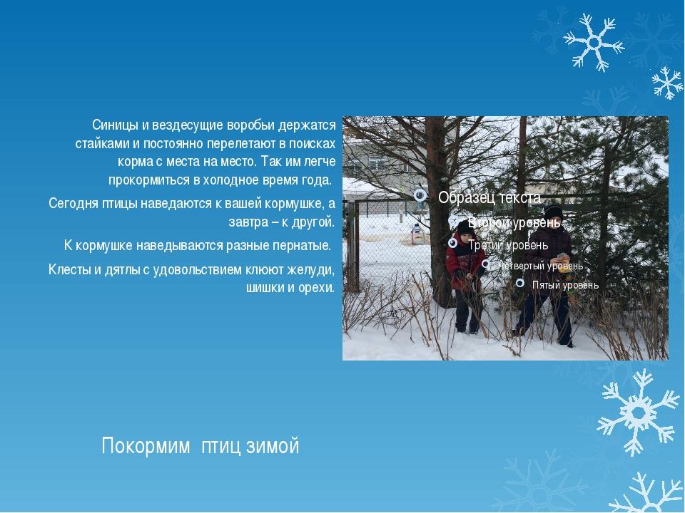 Покормим птиц зимой Синицы и вездесущие воробьи держатся стайками и постоянно...