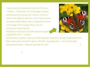 Самая распространенная бабочка России и Сибири – Павлиний глаз. Благодаря сво