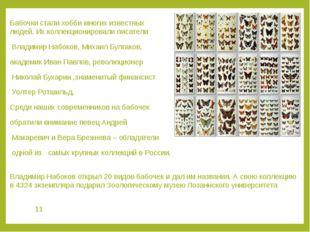 Бабочки стали хобби многих известных людей. Их коллекционировали писатели Вла