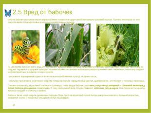 2.5 Вред от бабочек Многие бабочки заслужили место в Красной Книге только бла