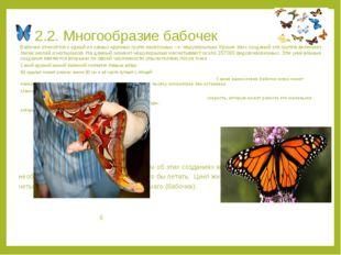 2.2. Многообразие бабочек Бабочки относятся к одной из самых крупных групп на