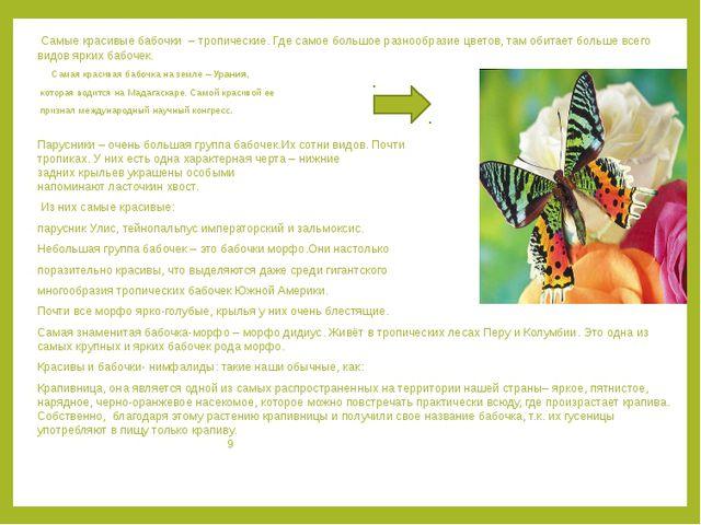 Самые красивые бабочки – тропические. Где самое большое разнообразие цветов,...
