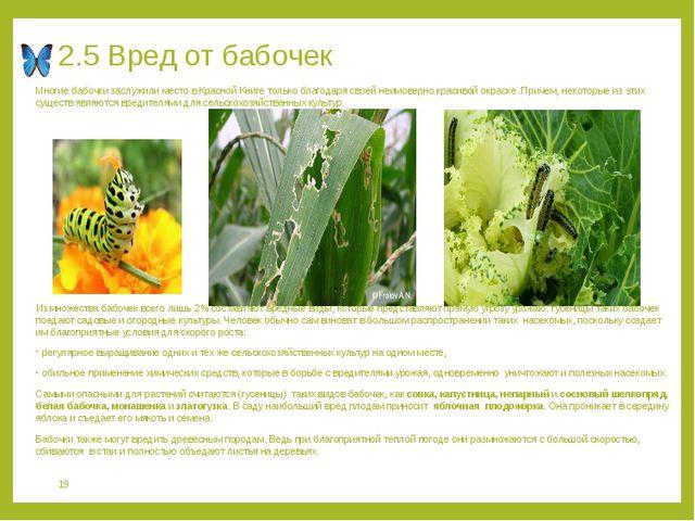 2.5 Вред от бабочек Многие бабочки заслужили место в Красной Книге только бла...