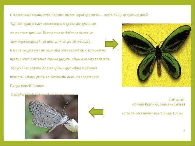 В основном большинство бабочек имеет короткую жизнь – всего лишь несколько дн...
