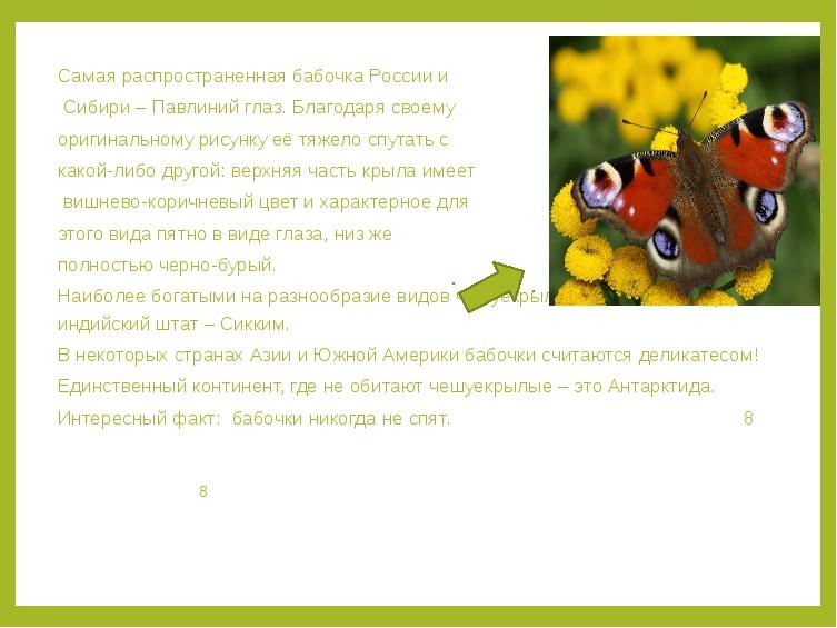 Самая распространенная бабочка России и Сибири – Павлиний глаз. Благодаря сво...