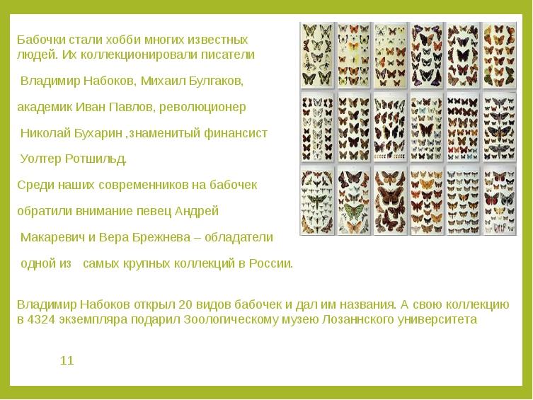 Бабочки стали хобби многих известных людей. Их коллекционировали писатели Вла...