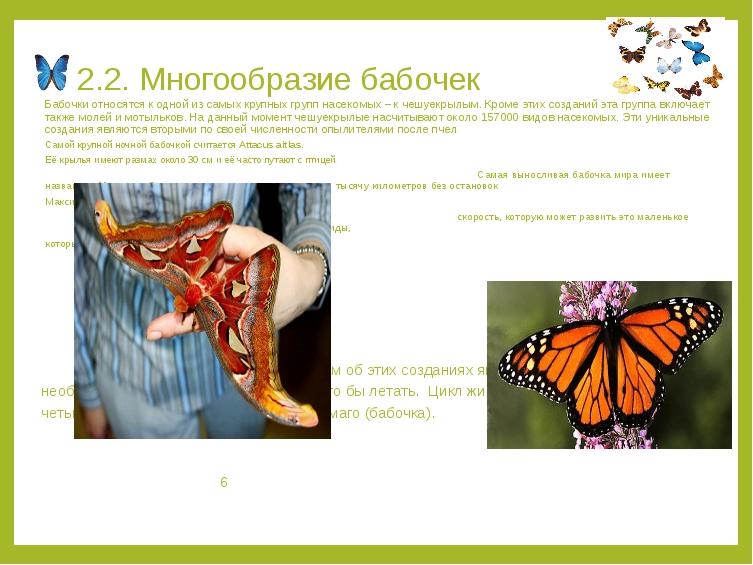 2.2. Многообразие бабочек Бабочки относятся к одной из самых крупных групп на...