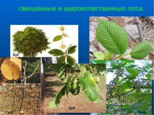 смешанные и широколиственные леса Бук Дуб Граб Вяз Ясень