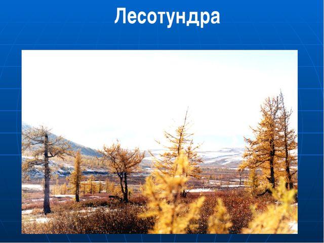 Лесотундра