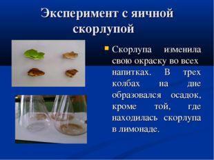 Эксперимент с яичной скорлупой Скорлупа изменила свою окраску во всех напитка