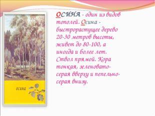 ОСИНА - один из видов тополей. Осина - быстрорастущее дерево 20-30 метров выс