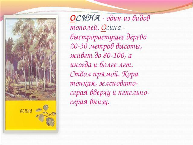 ОСИНА - один из видов тополей. Осина - быстрорастущее дерево 20-30 метров выс...