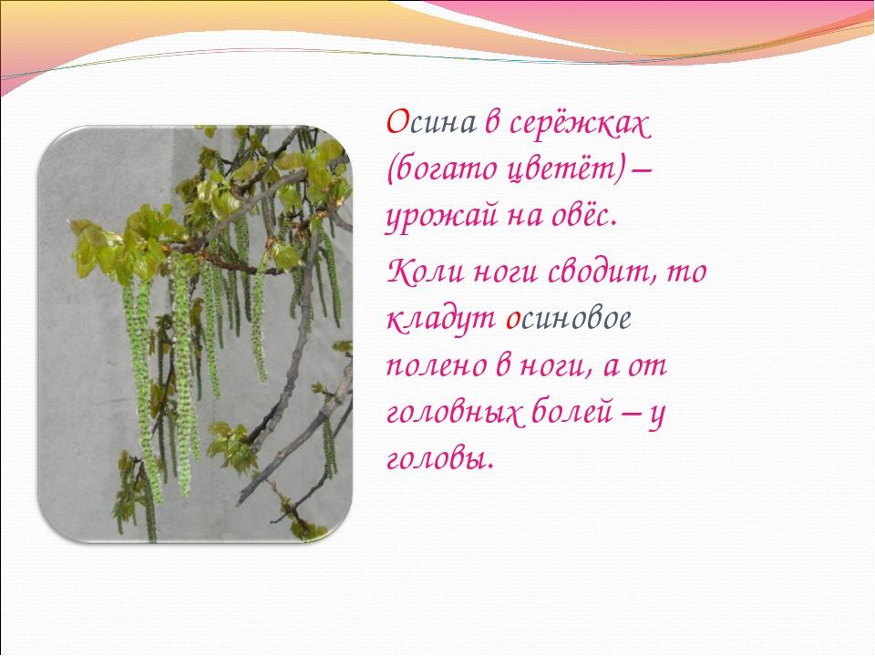 Осина в серёжках (богато цветёт) – урожай на овёс. Коли ноги сводит, то кладу...