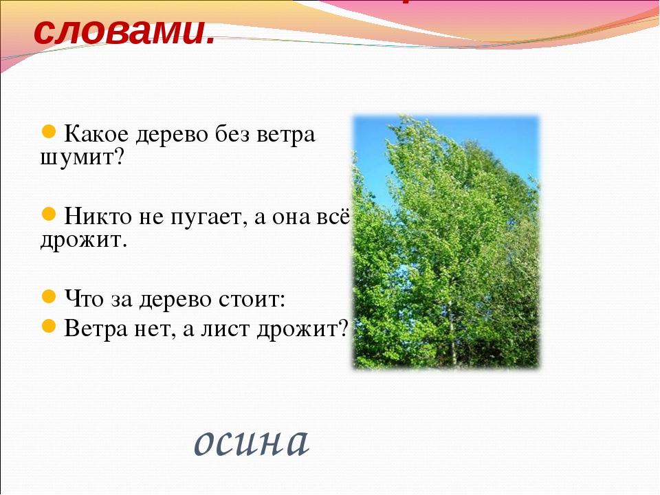 Какое дерево без ветра шумит? Никто не пугает, а она всё дрожит. Что за дерев...
