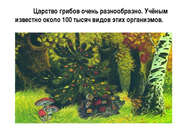 Царство грибов очень разнообразно. Учёным известно около 100 тысяч видов эти...